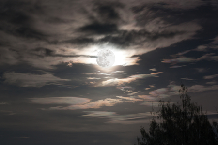 full moon in dark sky background a silhouette and pine trees Stock Photo
