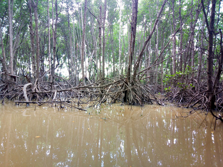 view the mangrove tree field with cloud blue sky, mangrove forest at Nature Preserve