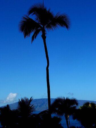 Palm tree silhouette hawaii Banco de Imagens