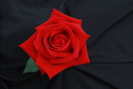 Top view of the red rose flower on black screen  photo