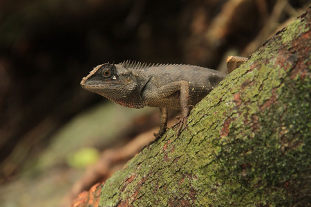 pedicel: Chameleon still stay on the stem of tree Stock Photo