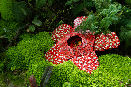 corpse flower: Corpse flower was made of interlocking plastic bricks toy. Scientific name is Rafflesia kerrii, Rafflesia arnoldii, Stinking corpse flower. The largest flower in the world.