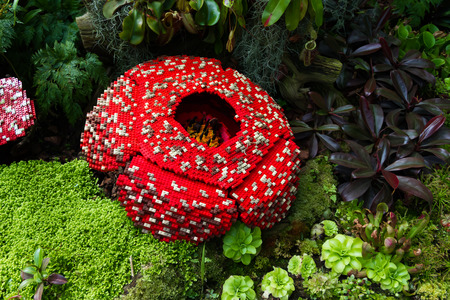 Corpse flower is made of interlocking plastic bricks toy. Corpse flower is the largest individual flower on earth. Stinking corpse lily. Scientific name is Rafflesia Arnoldii, Rafflesia kerrii. Stock Photo