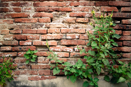 Shrubs with brick wall in a background. Effected light image