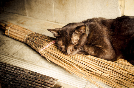 besom: Old cat relaxing on a witches broomstick.Concept  Black cat with witches broomstick Old cat with witchs broomstick (cat, broomstick, witch) Stock Photo