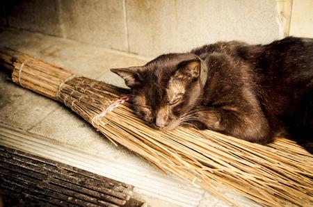 czarownica: Stary kot relaks na czarownice broomstick.Concept  Czarny kot z Czarownice broomstick  Old kota czarownicy z miotłą (kot, miotły, czarownica) Zdjęcie Seryjne