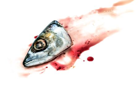 scardinius: Fresh saba fish head with Dripping blood on a white background Stock Photo
