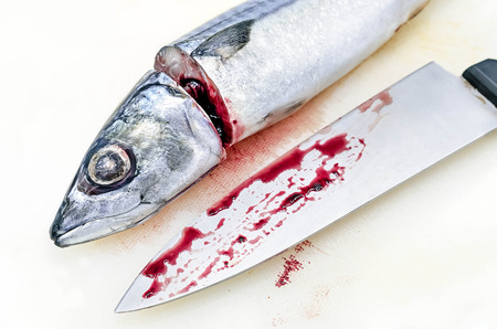 scardinius: Fresh saba fish and chefs knife with Dripping blood on white on cutting board, selective focus Stock Photo