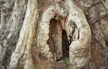 hollow tree: Heart-shaped hollow in a tree Stock Photo