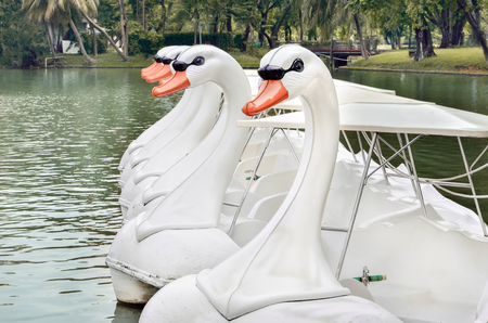 White Swan Boats Head in the park, Selective focus and Close up