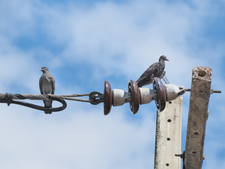 Two Pigeons sitting on the Electrical powered cable