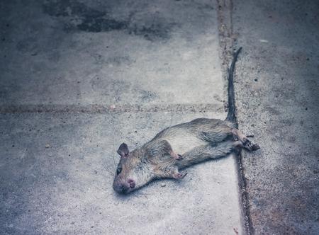 Dead rat death on the sidewalk. Selective focus Stock fotó