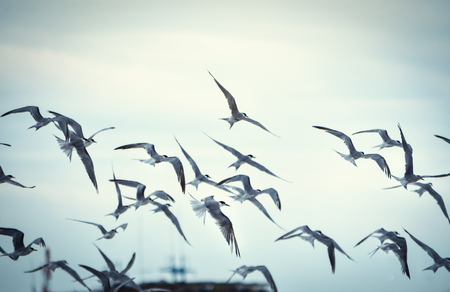 The crowd of seagulls flying in the wind on the beach in the morning. Imagens