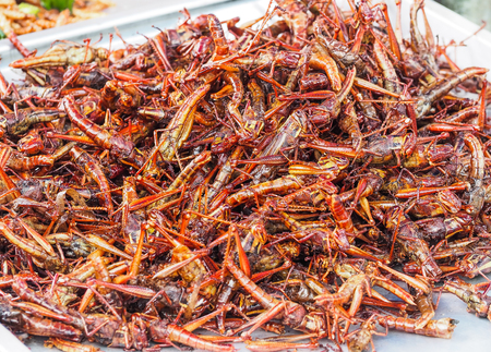 Fried grasshoppers sold at street markets in Bangkok, Thailand. Bio food. Stock Photo