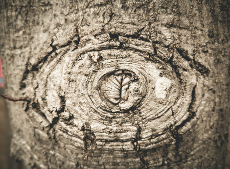 Texture of old wood with bark looking like the eye monster.