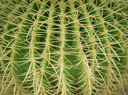 Beautiful of spiky green cactus covered in thorns textured. Nature plant abstract background. Stock Photo
