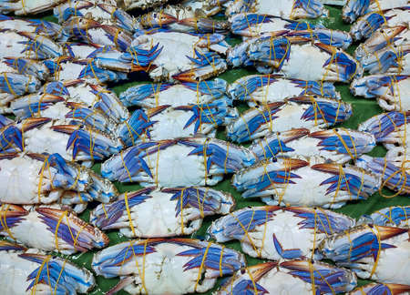 Fresh blue crab or thai crab are strapped with rubber bands for sale in the seafood market. Standard-Bild