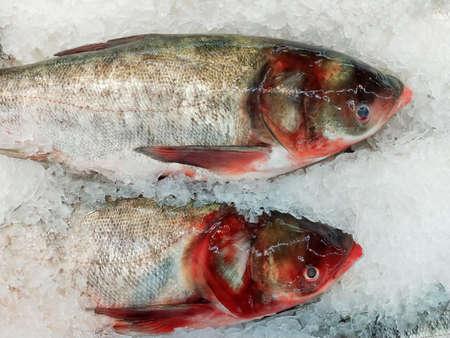 Fresh fish on ice sale in seafood market. Seafood raw fish.