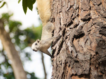 Cute forest squirrel came down from the tree.