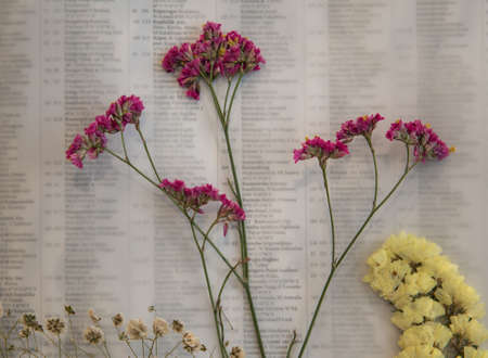 Beautiful dried flowers for decoration placed on wax paper.