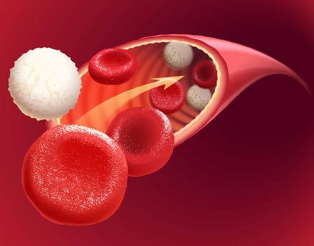 Illustration of circulating blood containing both red and white blood cells, vector. Vektorové ilustrace