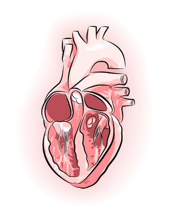Illustration of a heart with veins and arteries in three-dimensional images. Vector