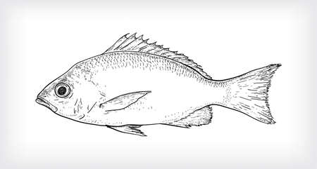 Black line art illustration, one scaly fish, used as a menu illustration, cover, brochure.