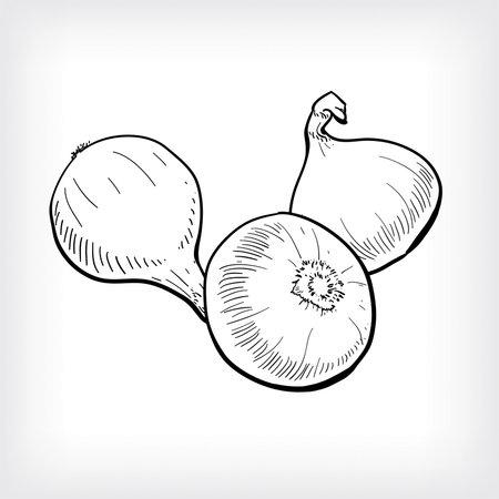 Onion set illustration hand drawn onion set hand drawn.