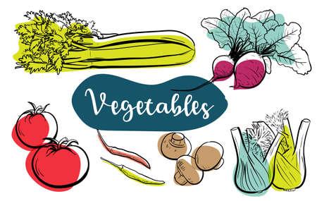 Vegetable Line Art Illustration, Natural Healthy Food, Vegetarian Food. Vector