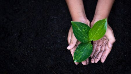 Planting young tree by kid hand on back soil as care and save wold concept Stok Fotoğraf