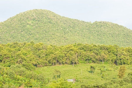 shifting: Landscape of the shifting cultivation