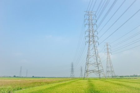 High voltage transmission lines and rice field photo