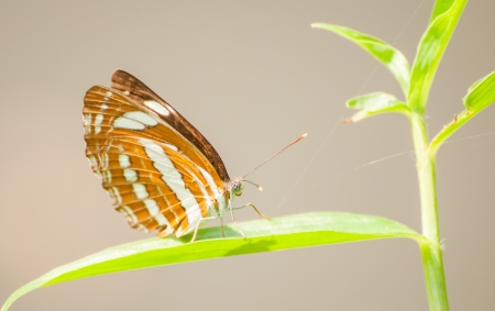 Monarch Butterfly sit on a leaves photo