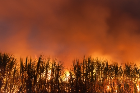 sugarcane be on fire photo