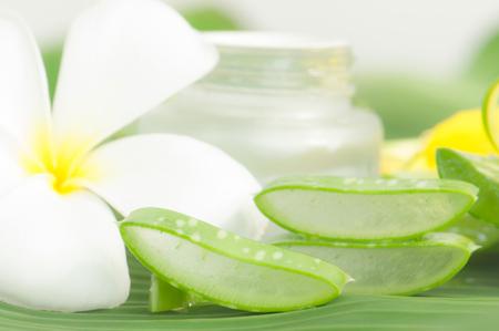 Aloe vera plant for skincare Stock Photo