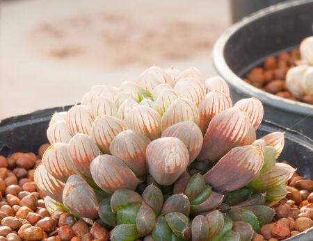 spinous: Cactus Close-up