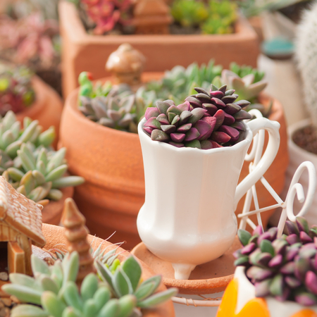 Cactus mini garden decorative photo