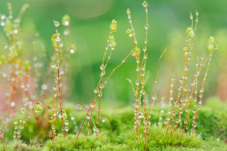 eau de pluie: D�vier l'eau de pluie de mousse Banque d'images