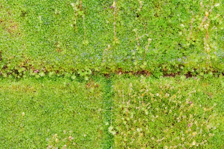absorb: Green moss absorb rainwater Stock Photo