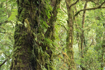 evergreen forest: Trees and fern at the evergreen forest