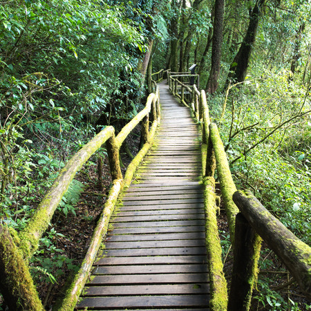 evergreen forest: Wooden footpath at the evergreen forest