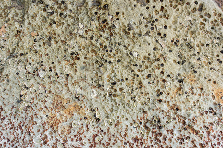 fossil: Stone fossil background