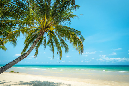 Coconut tree palm at the beautiful beach , Koh chang island in thailand
