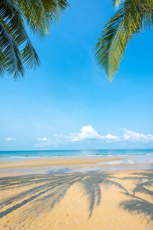 peaceful scene: Shadow coconut palm tree at the beautiful beach