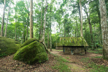 path cottage garden: Old wooden house at the evergreen forest