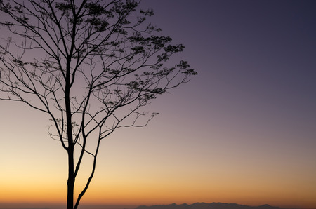 national plant: Silhouette tree