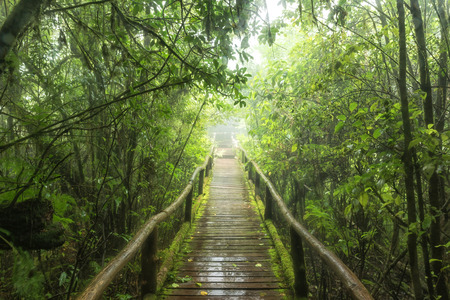 evergreen forest: Evergreen forest at nature trail in doiinthanon national park, Thailand