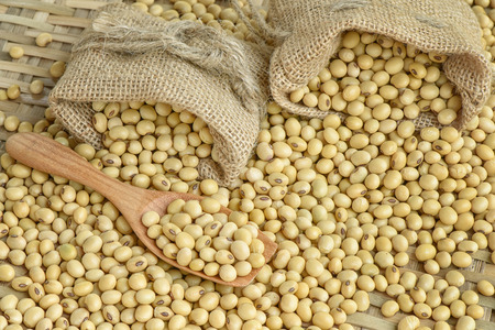 soy bean: Soy bean Stock Photo