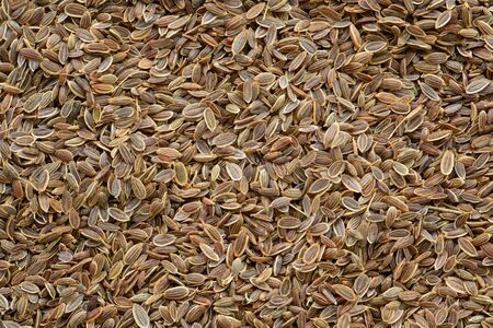 dill seed: Dill seed background