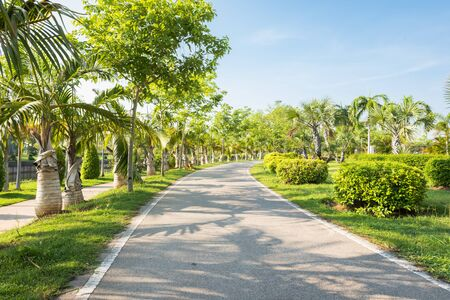 jogging track: Landscape with jogging track at green park , Jogging track in the park and no people